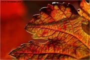 c21_618056_blatt_fb.jpg