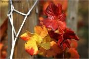 c21_618893_blatt_fb.jpg