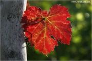 c21_736106_blatt_fb.jpg