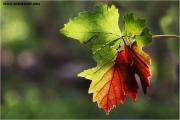 c21_737966_blatt_fb.jpg