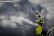 d600_087500_rebe_fb.jpg