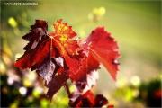 m3_107433_blatt_fb.jpg