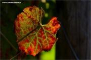 m3_129312_blatt_fb.jpg