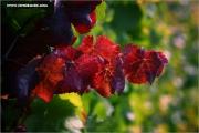 m3_129946_blaetter_fb.jpg
