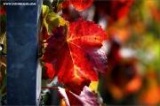 m3_129952_blatt_fb.jpg
