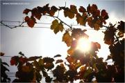 m3_132980_rebe_fb.jpg