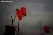 m3_133164_blatt_fb.jpg