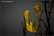 m3_133172_blatt_fb.jpg