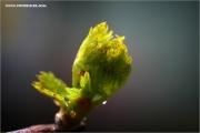 m3_137153_knospe_fb.jpg