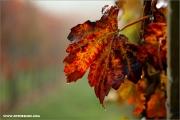 m3_140575_weinlaub_fb.jpg