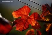 m3_140730_weinblatt_fb