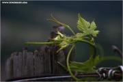 m3_821605_ranke_fb.jpg