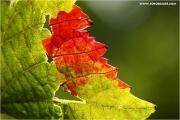 m3_831019_blatt_fb.jpg