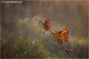 m3_833339_blatt_fb.jpg