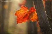 m3_836861_blatt_fb.jpg