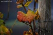 m3_837179_blatt_fb.jpg
