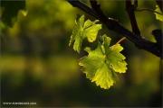 m3_935670_blatt_fb.jpg