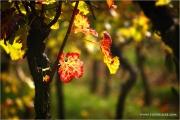 m3_938900_blatt_fb.jpg