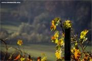 m3_939350_rebe_fb.jpg