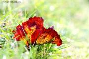 m3_940889_blatt_fb.jpg