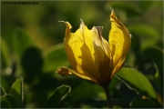 c20_640354_tulpe_fb.jpg