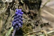 c21_720461_hyacinthie_fb.jpg