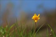 d100_167994_tulpe_fb