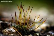 d600_136851_moss_fb.jpg