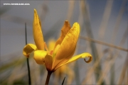 m3_088433_wilde-tulpe_fb
