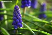 m3_107305_hya_fb.jpg