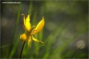 m3_109001_witu_fb.jpg
