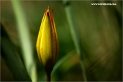 m3_120281_tulpe_fb.jpg