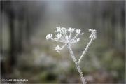 m3_127108_winter_fb.jpg