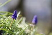 m3_144640_hya_fb.jpg