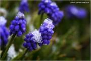 m3_813326_hya_fb.jpg