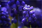 m3_815012_hya_fb.jpg