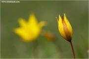 m3_815959_witulpe_fb.jpg