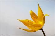 m3_815990_tulpe_fb.jpg