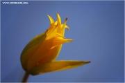 m3_817720_witulpe_fb.jpg