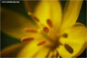 m3_818188_tulpe_fb.jpg
