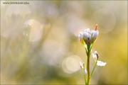 m3_918808_bluete_fb.jpg