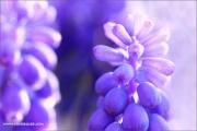 m3_919643_hya_fb.jpg