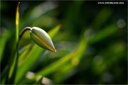 m3_919822_tulpe_fb.jpg
