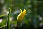 m3_919830_tulpe_fb.jpg