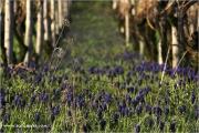 c20_640211_hyacinthie_fb.jpg