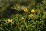 c20_640334_tulpen_fb.jpg