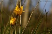 c20_640379_tulpe_fb.jpg