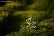 c21_746245_moos_fb.jpg