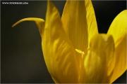 c21_790484_tulpe_fb.jpg