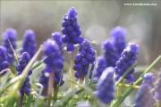 m3_107372_hya_fb.jpg